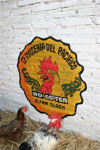 rooster-alarm-clock-rackfish-creature-pacifico